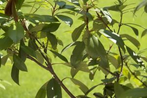 tratamientos fitosanitarios comuno